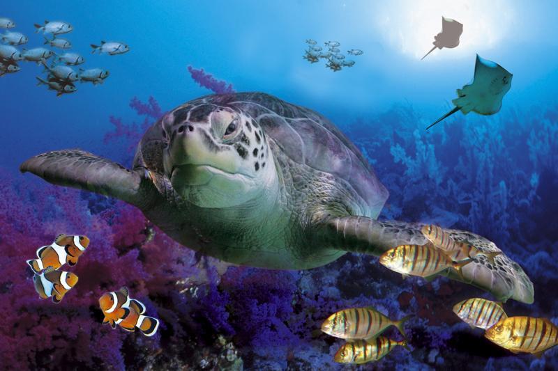Parque Submarino Sea Life