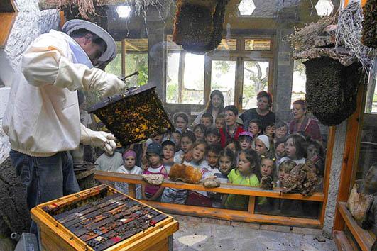 Museo de la Miel y las Abejas