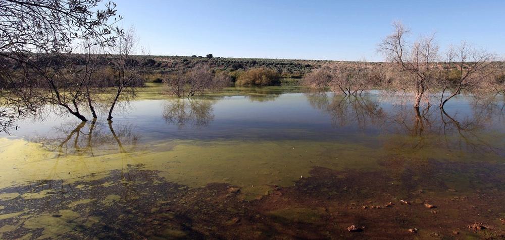 Laguna de los Jarales