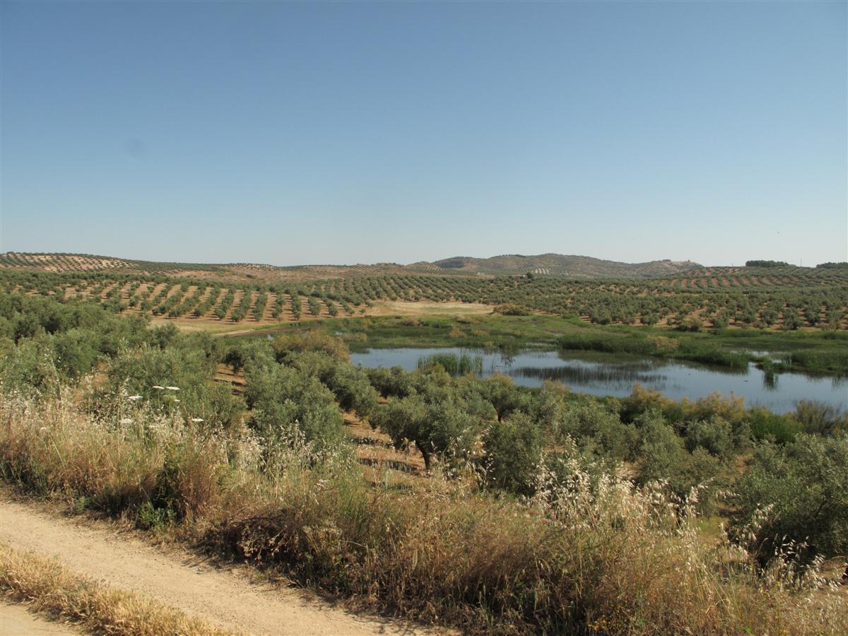 Laguna del Chinche