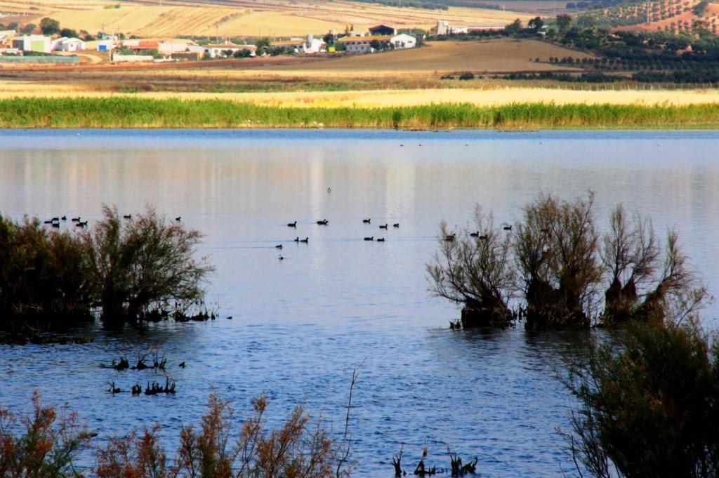 Lagunas de Campillos