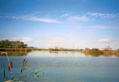 Lagunas de Palos y Las Madres