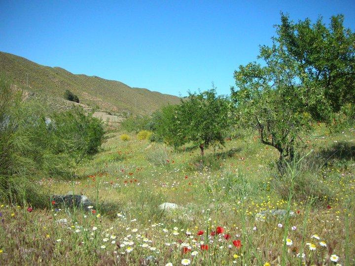 Sendero La Cuesta Blanca. De Sierro a Bacares - PR-A 14
