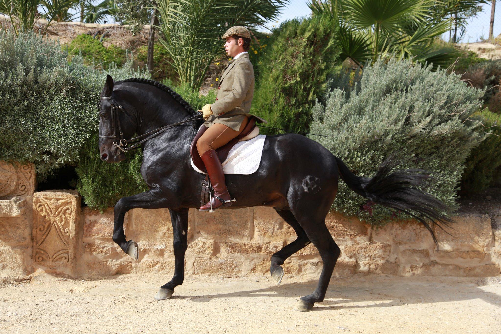 Hamelin: Escuela de Equitación Antonio Angulo - Actividad  (Osuna)