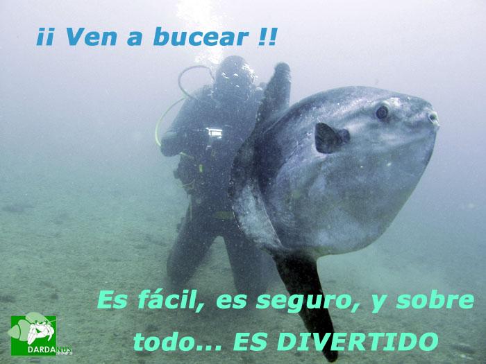 Hamelin: Escuela de Buceo Dardanus - Actividad  (Calahonda)
