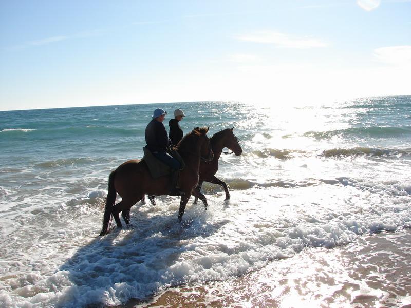 Hamelin: Centro Hípico Pinares y Mar - Actividad  (Conil de la Frontera)