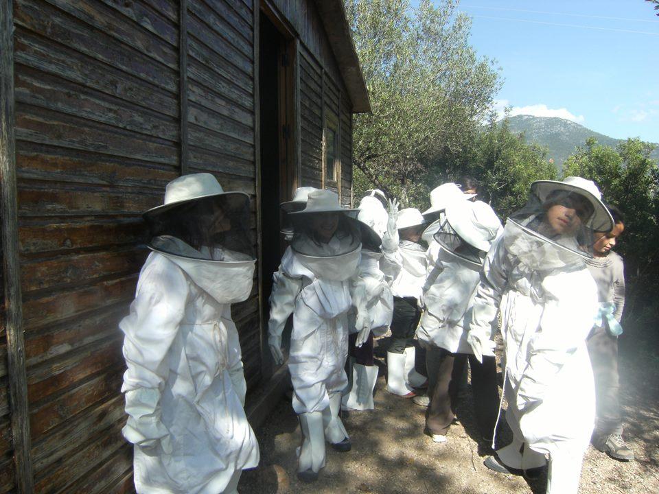 Hamelin: Aula de Naturaleza Higuerón de Tavizna - Actividad  (Benaocaz)