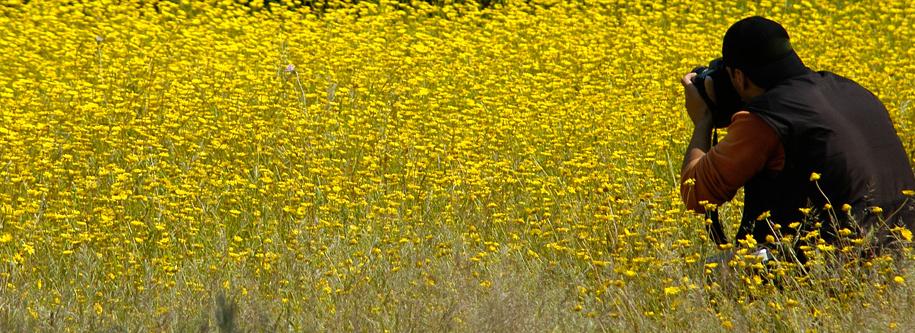 Hamelin: Doñana Nature - Actividad  (El Rocío)