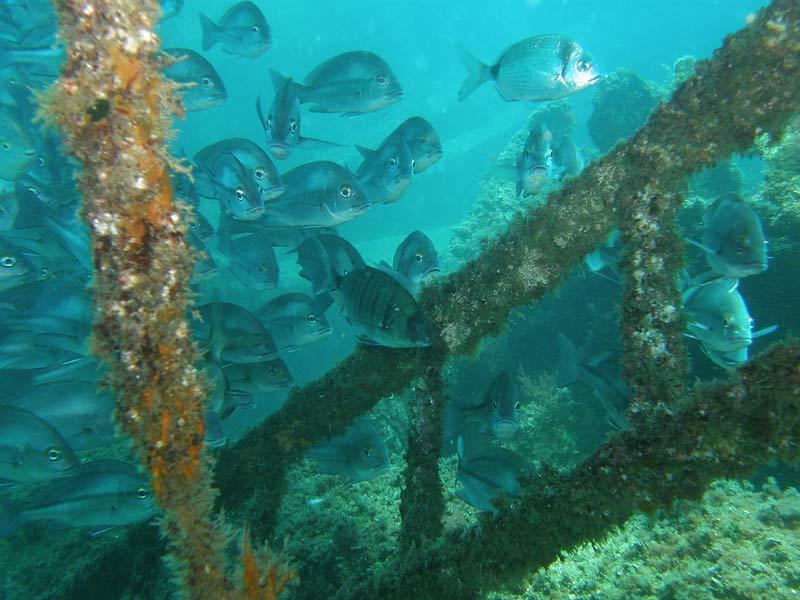 Hamelin: Into The Blue Diving - Actividad  (Benalmádena)