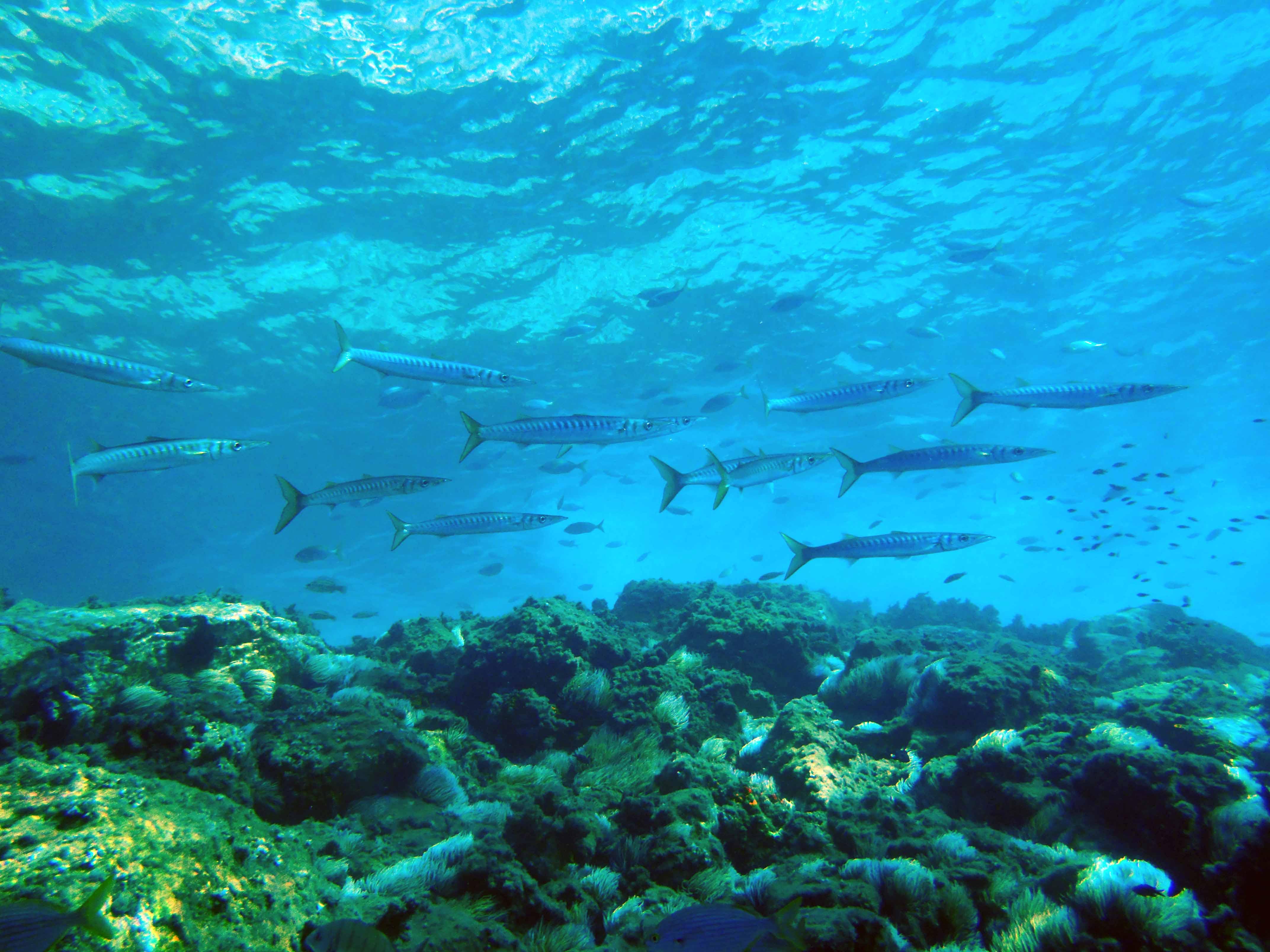 Hamelin: Aquatours Almería Aventuras Submarinas - Actividad  (Aguadulce)