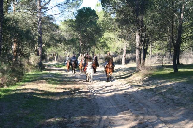 Hamelin: Doñana a Caballo - Actividad  (Almonte)