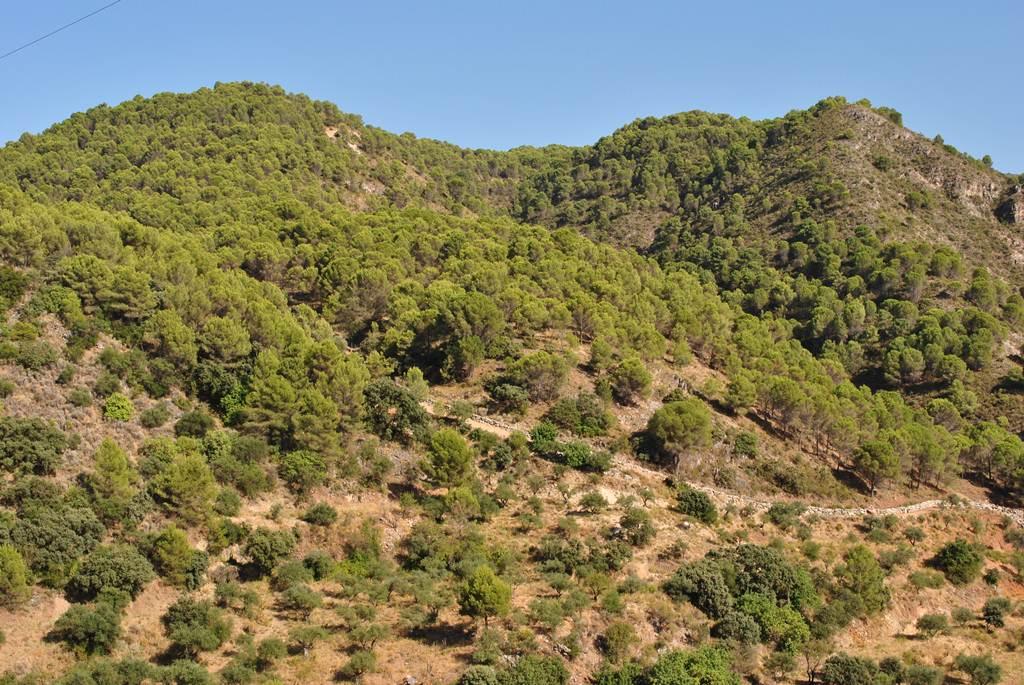 Sendero Monda – Cerro Gordo – PR-A 275