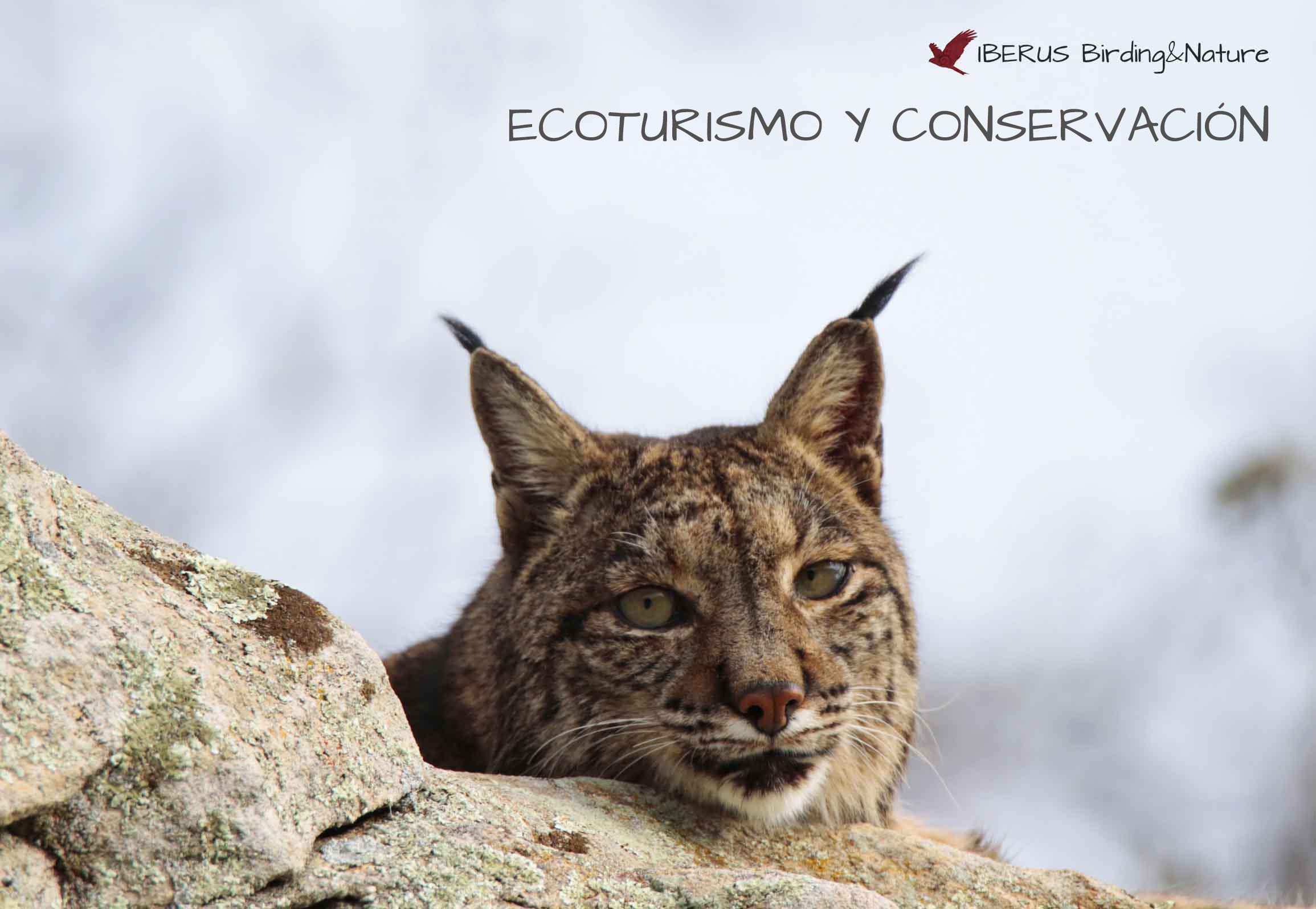 Iberus Birding & Nature