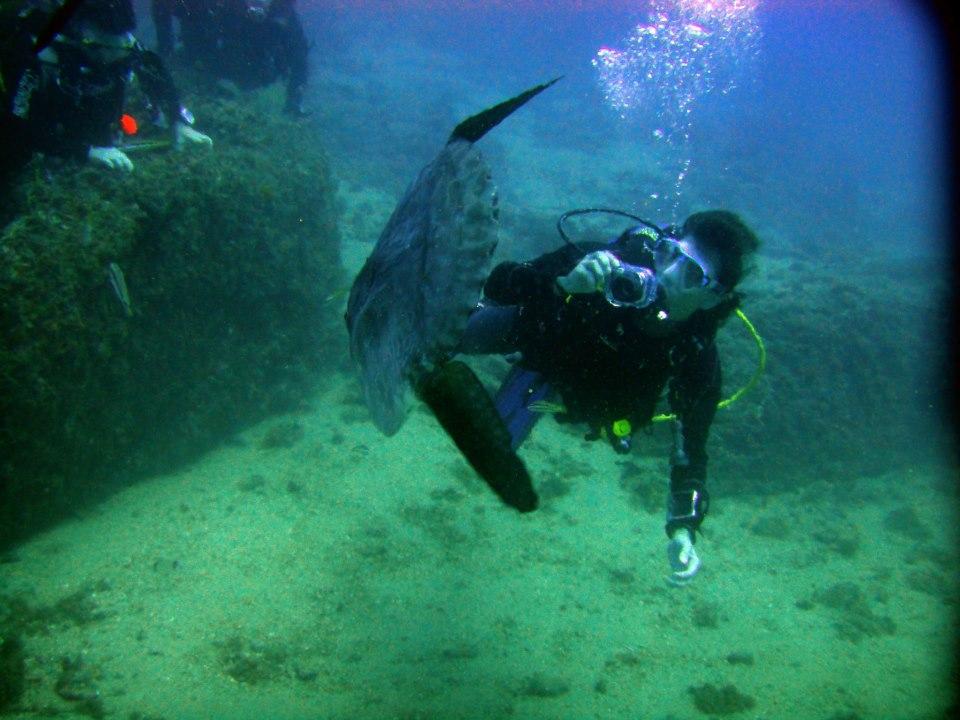 Centro de Buceo Bubbles Sea