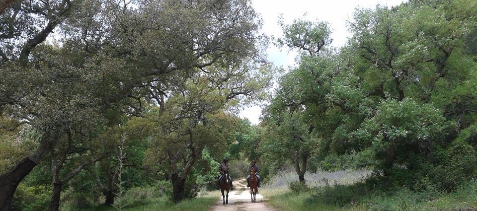 Endurance Equestrian Experience