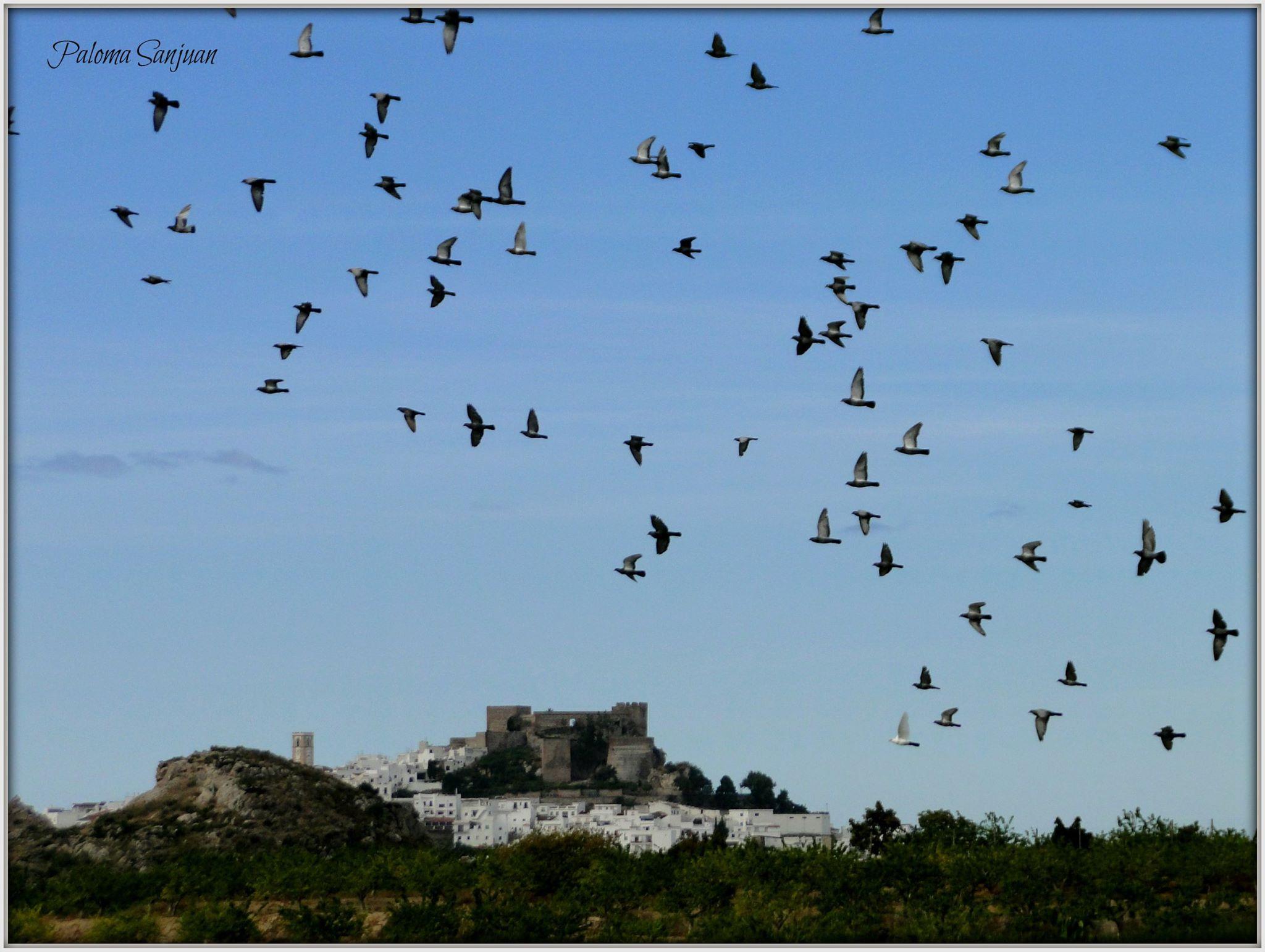 Itinéraire pour l'observation des oiseaux à Salobreña