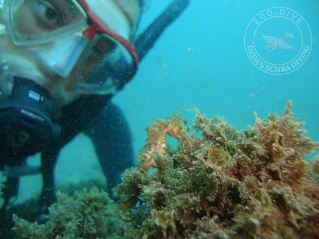 Eco-Dive