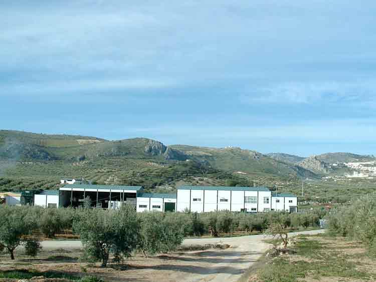 Olivarera Santa Rita