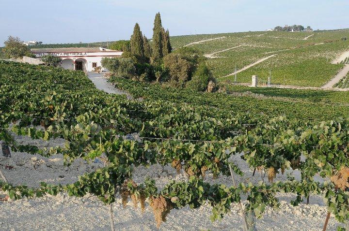 Museo de la Viña al Vino de Jerez
