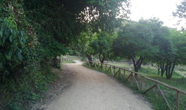 Der grüne Korridor der Stadt