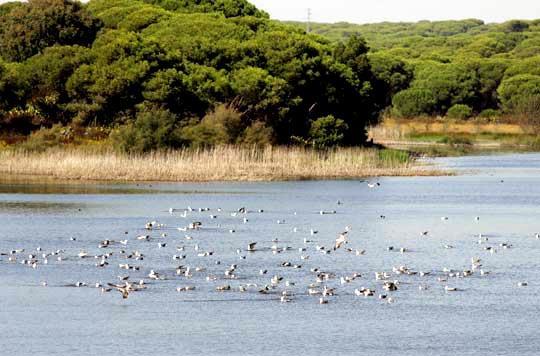 Laguna de El Portil