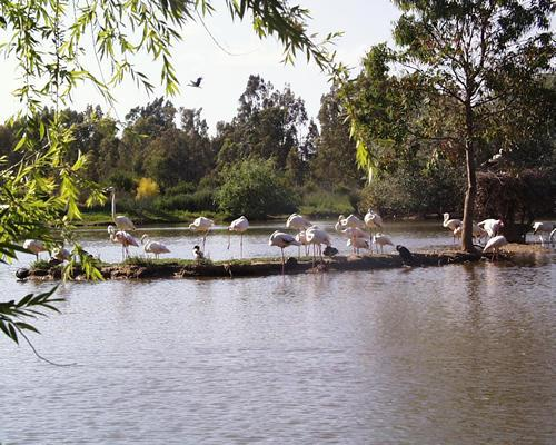 Cañada de los Pájaros