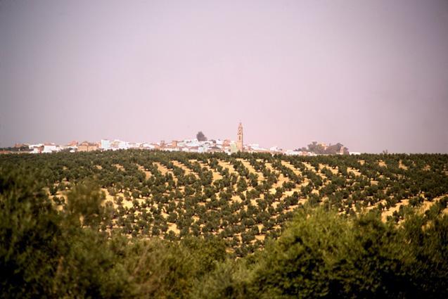 Córdoba y la Zona del Guadalquivir
