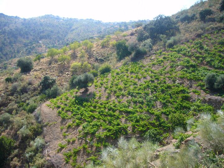 Parque Natural Montes de Málaga