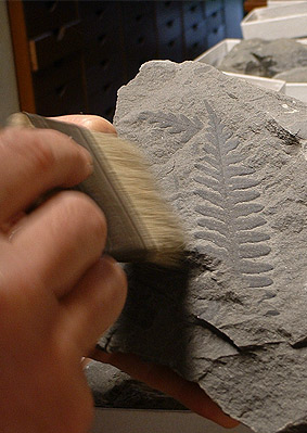 Museo de Paleobotánica