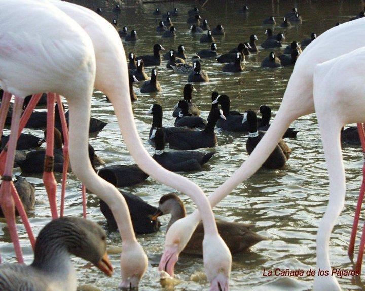Reserva Natural Concertada La Cañada de los Pájaros
