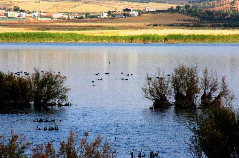 Reserva Natural Lagunas de Campillos
