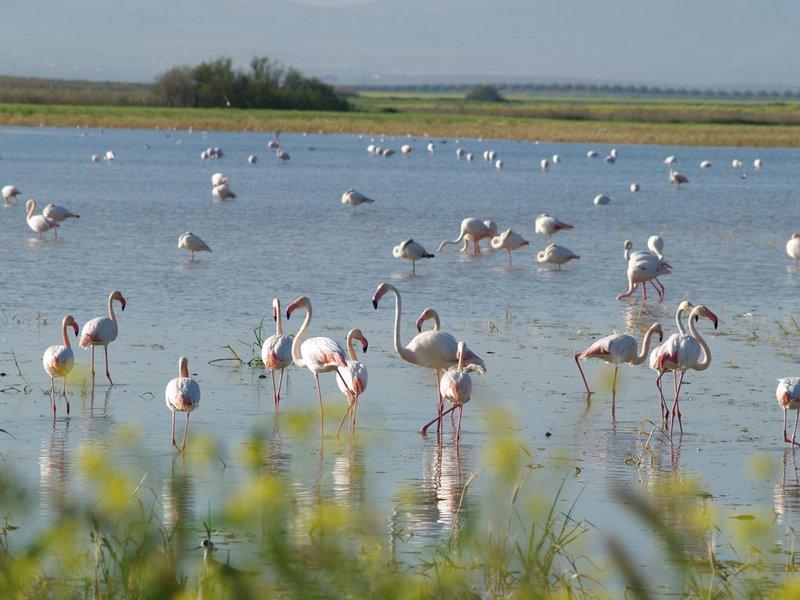 Reserva Natural Complejo Endorreico de La Lantejuela