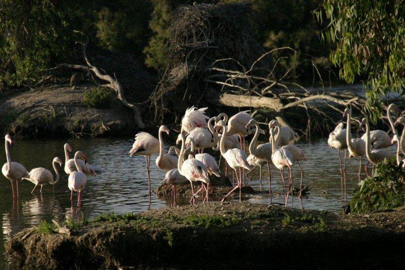 Reserva Natural Concertada Cañada de los Pájaros