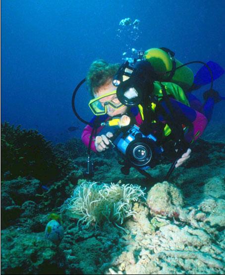 Monumento Natural Arrecife Barrera Posidonia