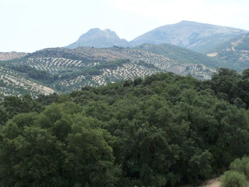 Monumento Natural Bosque de la Bañizuela