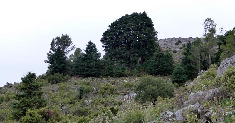 Monumento Natural Pinsapo de las Escaleretas