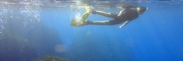 Hamelin: Buceo Costa Nerja - Actividad  (Nerja)