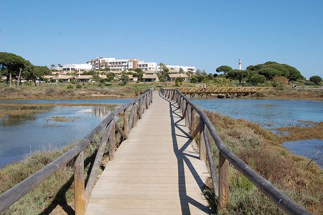 Doñana Spoonbill Trips