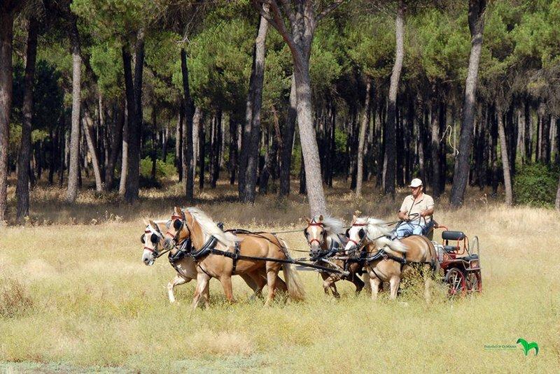Paraíso Doñana - Nature & Horses Resort