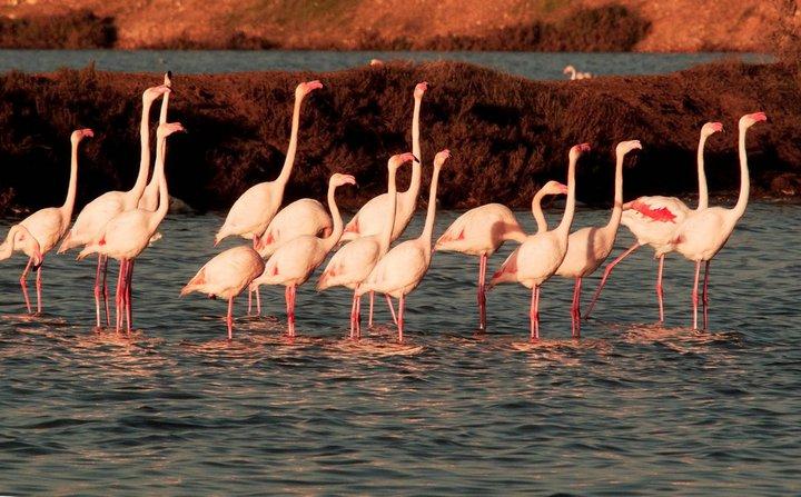 Turisla Doñana