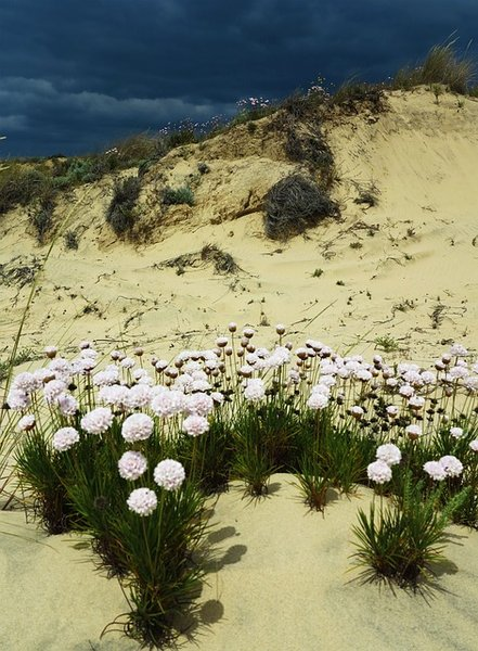 Doñana dunas y flora