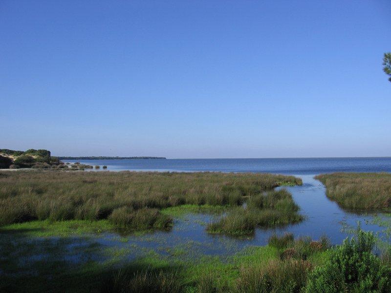 Marismas de Doñana y Mar