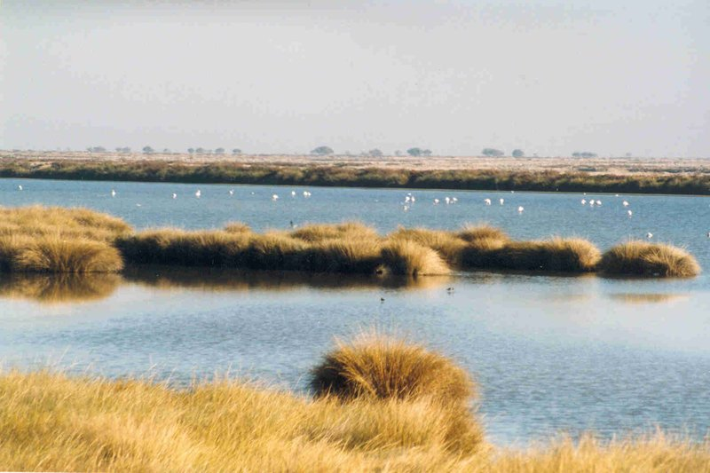 Humedales de Doñana