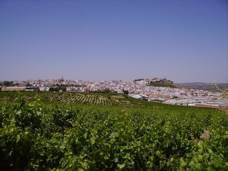 Ruta del Vino Montilla-Moriles