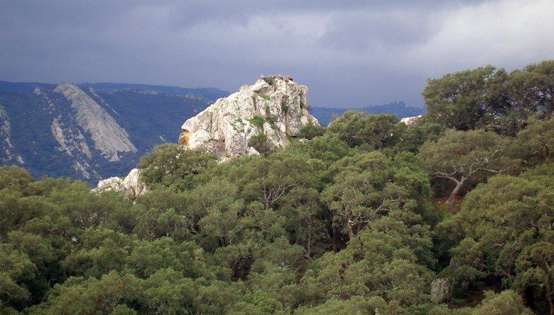 Los Alcornocales - Web oficial de turismo de Andalucía