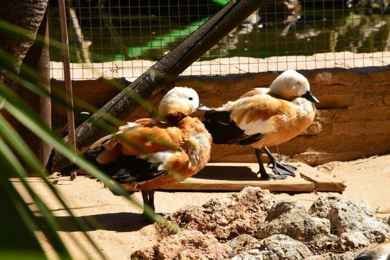 Parque Ornitológico Loro Sexi