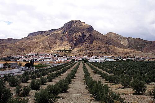 Alicún de Ortega