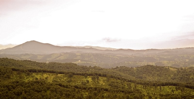 Sierra de Cardeña y Montoro