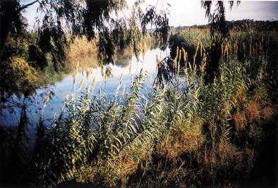 Marismas del Río Palmones