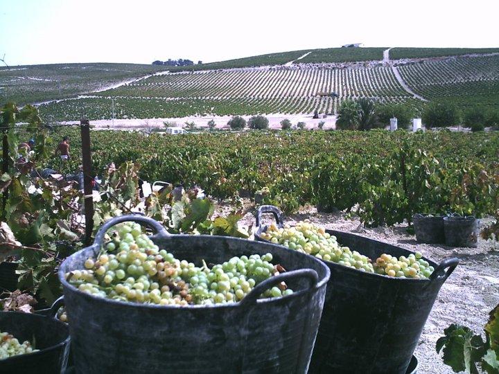 Hamelin: Un plan seguro: visita La Bodega-Viña Santa Petronila y cata sus vinos - Actividad  (Cádiz)